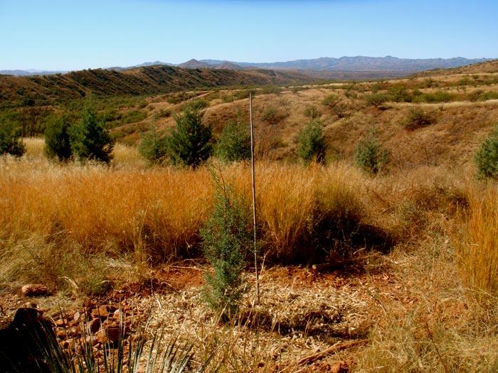 Ravensway Adopt A Tree
