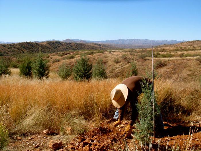 Tree choices, benefits to wildlife